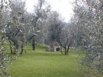 Apartment Old House Chianti, Tuscany - Garden