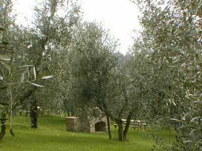 Cottage Wine Barrel Florence - Garden