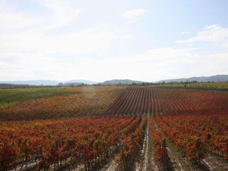 Vineyard close to villa